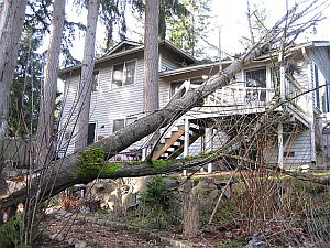 tree pruning and thinning in Bellevue WA