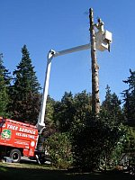 tree pruning and thinning in Kirkland WA